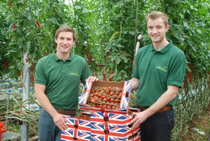 Matt Ware and Andrew Mackay show bees essential to tomato production at Cornerways Nursery